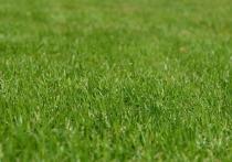 Запретить коммунальщикам стричь траву шумными газонокосилками предлагают общественники