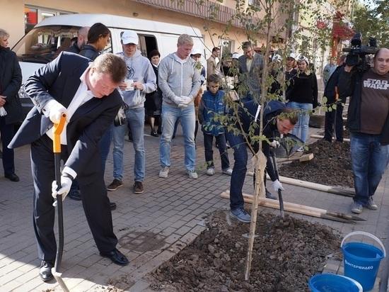 Продолжение зеленого марафона: мэр Калуги высадил в центре города березы