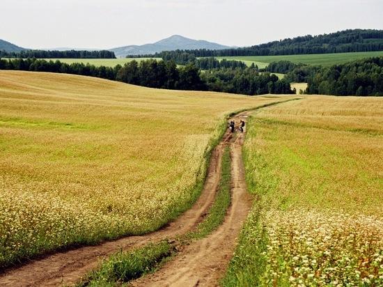 В Красноярском крае продолжается уборочная страда