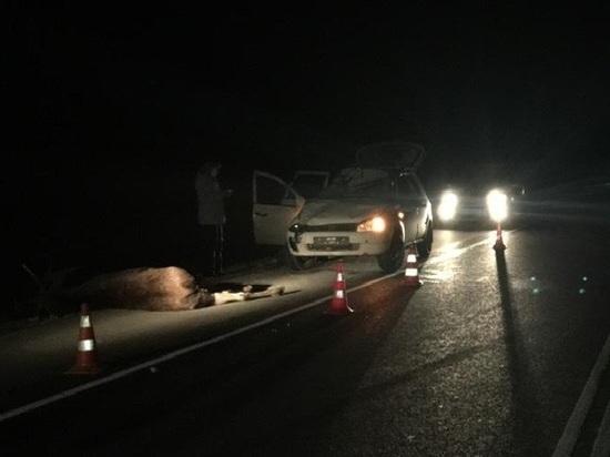 Легковушка сбила лося на трассе под Калугой, животное погибло