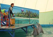 Если вы этим летом отдыхали на Черном море и побывали там на представлении с морскими млекопитающими, вполне вероятно, что вы невольно поучаствовали в преступлении