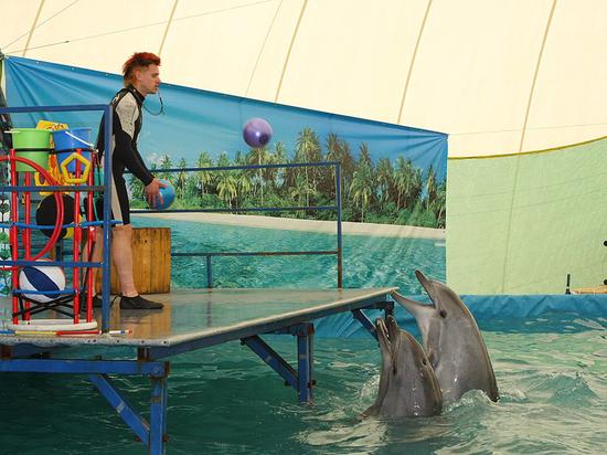 А дельфины добрые, а дельфины мертвые: беда за кулисами шоу