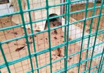 «Хотел продать на мясо»: посетитель парка Горького рассказал, зачем передушил фазанов