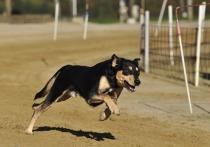 Еду не подбирать: В Россия появится ГОСТ на дрессировку собак