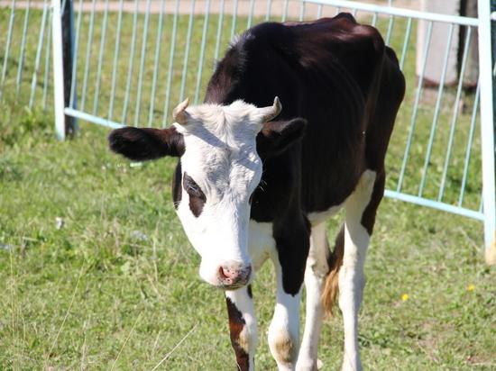 Передовые биотехнологии прошли успешные испытания в сельских хозяйствах Вологодчины