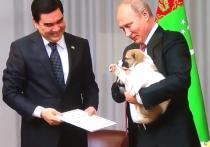 Кинолог про алабая, подаренного Путину: «Умеет собрать козлов в кучу»