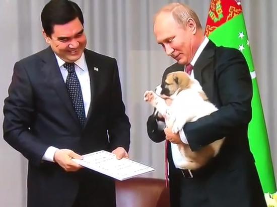Кинолог рассказала про особенности породы щенка, которого ВВП вручил президент Туркменистана