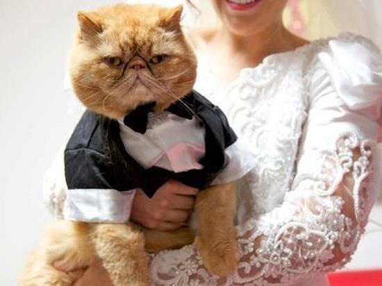 Московские ветеринары спасли котенка, который надел на лапу хозяйское кольцо