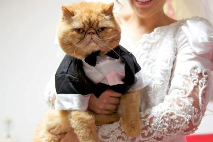 фотошторы картинка с кошкой все замуж выходят этой