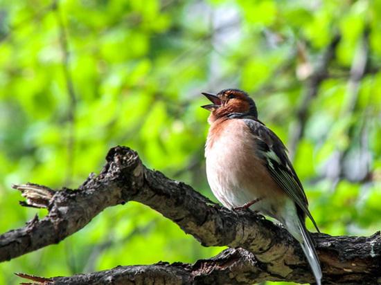 Наблюдая за гнездом кукушки: в Осе открылся экологический визит-центр (открытое голосование)