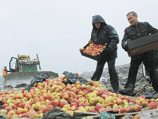 Праздник недоедания: уничтоженной санкционкой можно было накормить миллионы голодающих