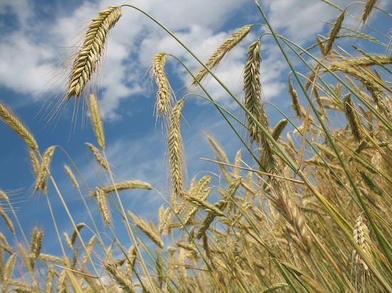 Наша страна может обеспечить миллиард людей продовольствием, если оно не успеет прогнить