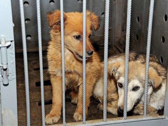 Бездомные животные в Казахстане жестоко истребляются самыми варварскими методами