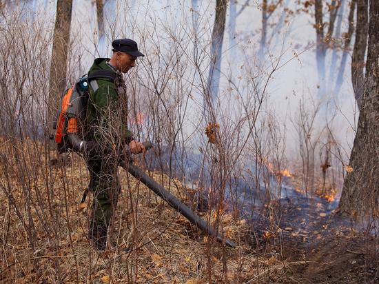 Пожары в приморских лесах скоро прекратятся