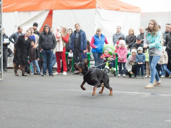 Парад собак красивейших пород устроит «Гармония» для жителей Ставрополья