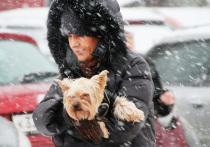 Синоптики рассказали, когда в Москве снова пойдет снег