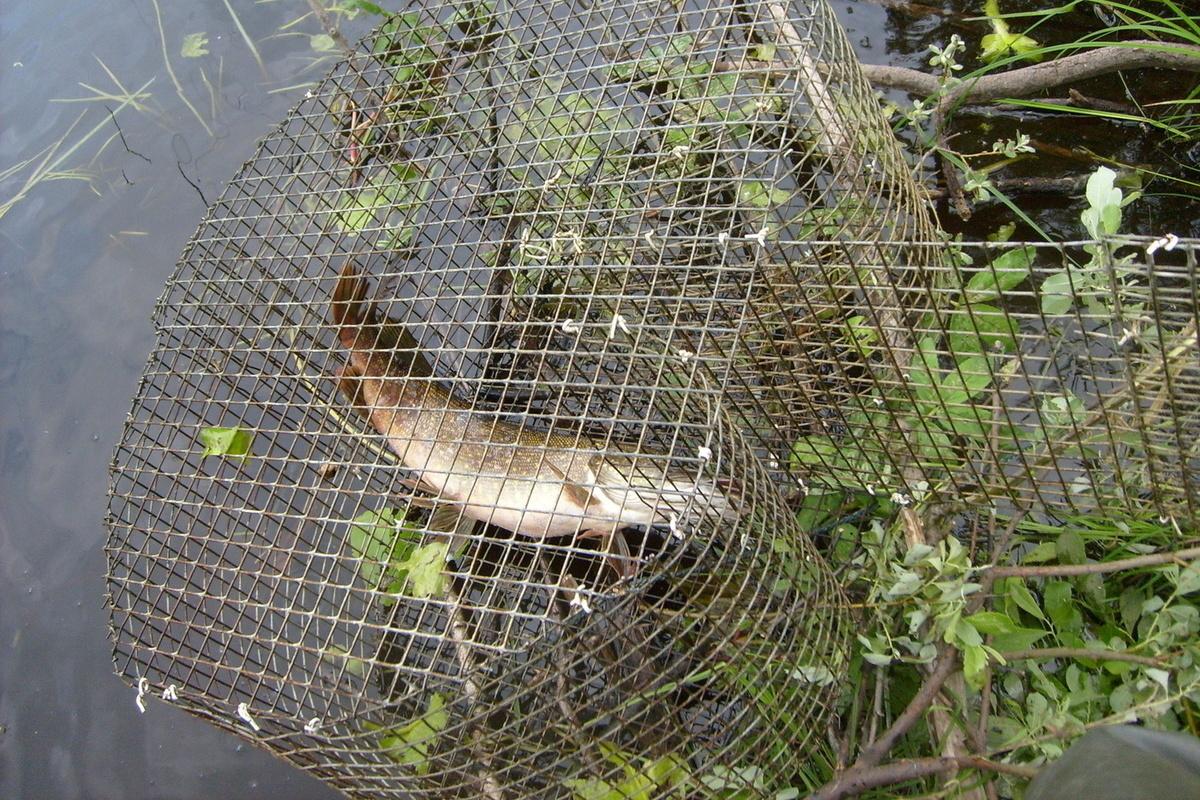 Корчажки для ловли рыбы