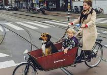 Усыновляют, как детей: почему на Западе любят русских собак