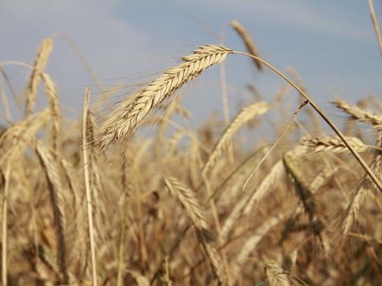 В перечень инвестпроектов в агросфере Башкирии входит 21 производство
