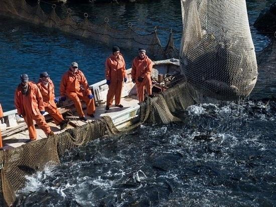 Ради сохранения популяции рыбы власти примут жесткие меры