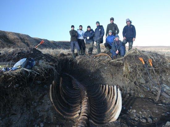 На Командорах нашли крупнейший за последний век скелет морской коровы