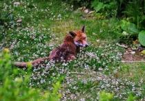 Запретить охотникам натаскивать собак на притравочных площадках предлагают общественники