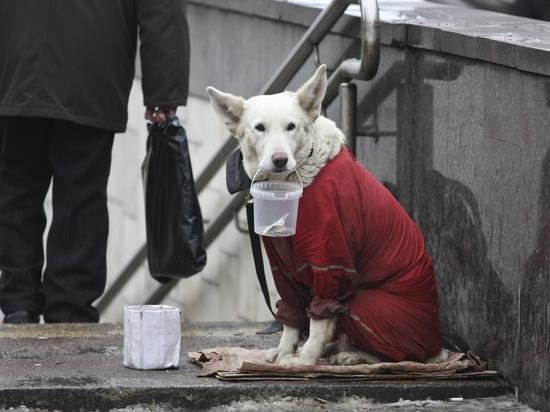 Зоозащитники: ужесточение наказания за живодёрство спасет жизни людей