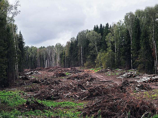 Кузбассу нужна методика оценки экологического ущерба
