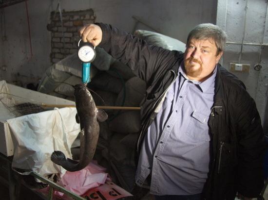 Африканских сомов начали разводить в Нижегородской области