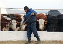 Господдержка трем  костромским фермерам составляет более 7 миллионов рублей