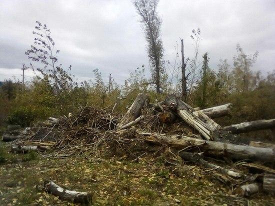 Как незаконная вырубка леса в Кувандыке стала законной