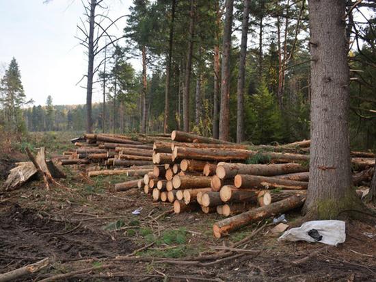 Как Томской области нанесли ущерб порубками