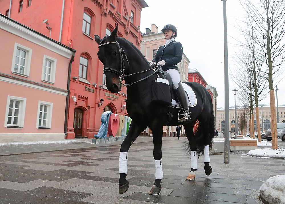 Лошадь привезла в приемную Путина 7 000 подписей за ипподром