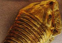 Глаз существа, жившего полмиллиарда лет назад и являвшегося предком современных пауков и многих других членистоногих, обнаружили палеонтологи во время раскопок на территории Эстонии