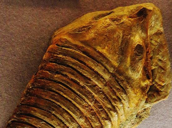 В Эстонии обнаружен древнейший известный науке глаз