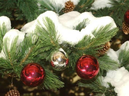 «Она устала»: в Сети высмеяли облысевшую главную новогоднюю ёлку Украины