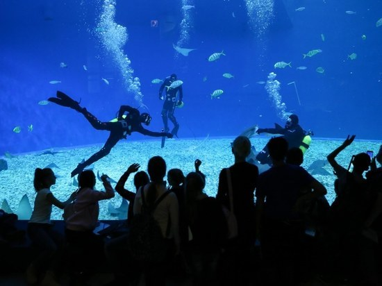 В Приморском океанариуме зрители слепят морских зверей