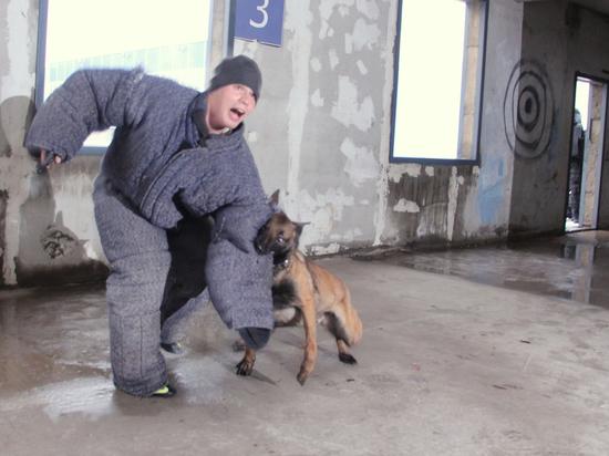 Депутаты ставят капканы на помощников охотников