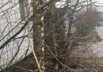 Аномально теплая зима в столичном регионе разбудила природу
