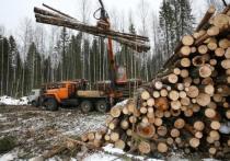 Бизнес Костромской области заплатил за лес более 500 миллионов  рублей