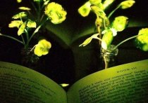Известно, что некоторые организмы способны светиться в темноте, однако сияют они не настолько ярко, чтобы служить источником полноценного уличного освещения