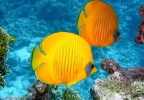 Если спросить человека, какое живое существо ассоциируется у него с молчаливостью, высока вероятность, что он назовет рыб