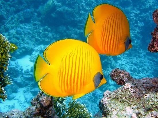 Биологи записали и разместили в интернете оглушительную песню рыб