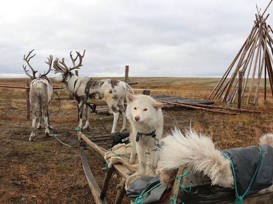 «ПОРА» запускает программу «арктических» грантов