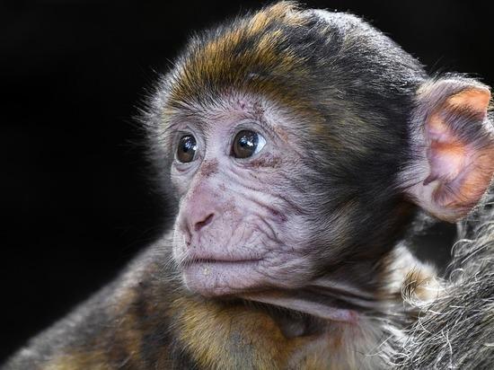 Зоологи нашли среди макак «социофобов»