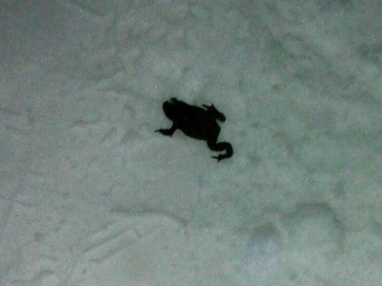 В Балашихе из-за потепления вылезли на снег жабы