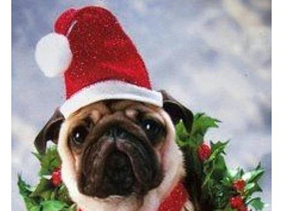 Если вы решили на Новый год подарить собаку: маленькие популярнее