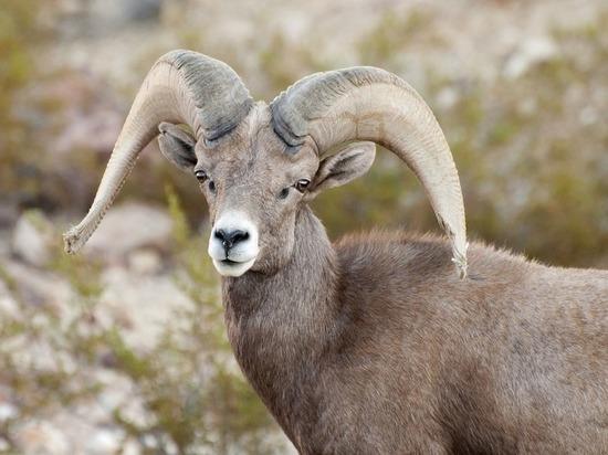 Из Красной книги исключили популярные у браконьеров виды