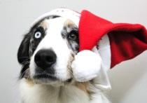 Новый год 2018 — год Желтой Собаки