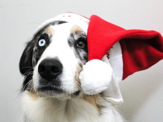 Картинки по запросу собаки